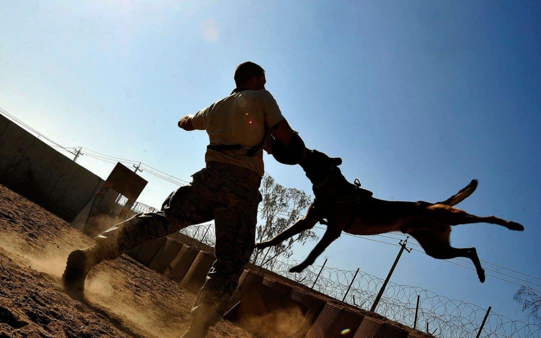 Las Vegas Dog Bite Statistics: Facts According to Dog Breed